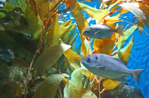 Seaweed nutrition imnatural blog conversations for What do wild fish eat